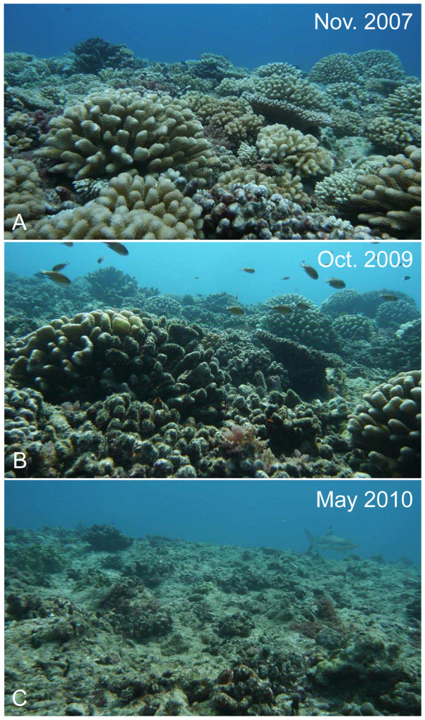reduction in coral cover.
